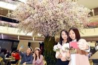 """[포토] """"미세먼지 걱정 없는 실내 벚꽃놀이 즐겨보세…"""