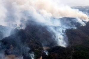 고성 산불 축구장 49배 면적 태워…건물 9동 소실·軍 물자 이동