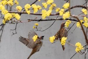 [한 컷 세상] 새들도 반가운 봄