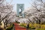 '봄이 활짝'… 꽃망울 …
