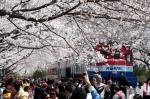 벚꽃과 기차