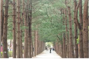 산림, CO2 9억3500만t 저장… 공익가치 126조