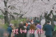 [현장영상] 여의도 벚꽃축제 앞둔 윤중로