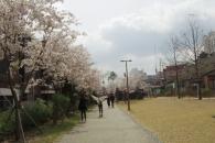 [길을 걷다] 벚꽃 휘날리는 경의선 책거리