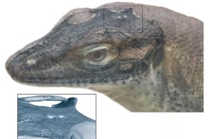 [핵잼 사이언스] 4900만년 전 왕도마뱀 4개의 눈은 '생체 시계'