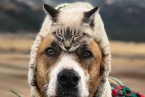 모자 아님 ㅋ 견공 머리 위에서 잠든 채 하이킹 즐기는 고양이