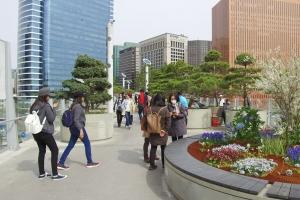 [길을 걷다]서울로 7017, 도심 속 공중정원을 걷다