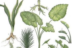 [이소영의 도시식물 탐색] 관엽식물, 잎의 비밀