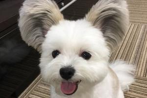 미키마우스 귀 가진 댕댕이…'미키보다 더 귀엽네'