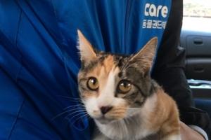 동물단체, '현상금 300만원' 고양이 학대자 찾아…고발 방침