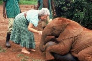 케냐 코끼리들의 어머니 셀드릭 암으로 83세 삶 마감
