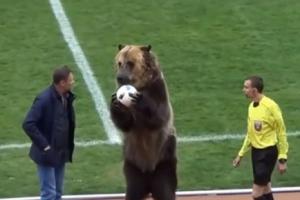 러시아 프로축구 경기 전 주심에 공 건네고 손뼉치는 서커스 곰