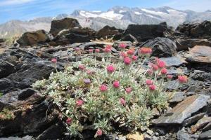 고산에 피어나는 낯선 꽃…온난화 '두 얼굴' 보여주다