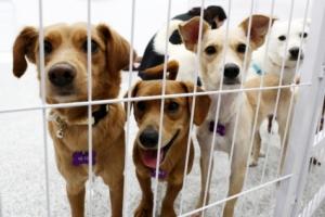 서울시, 반려동물·길고양이 등 1500마리 전염병 검사