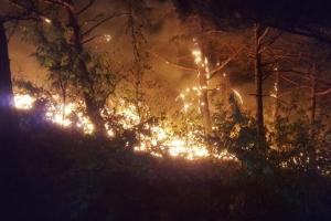 양양 산불, 3㏊ 태우고 진화 완료