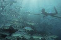 13분동안 잠수할 수 있는 인도네시아 '바자우족'