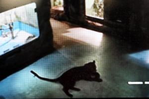 김해 동물원서 흑표범이 사육사 공격…생명에 지장 없어