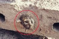콘크리트 슬래브 속 갇힌 고양이 1시간만에 구조