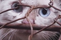 고양이 장난감의 진실…일부 실제 고양이 털로 만들어…