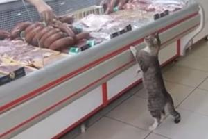 """정육점 방문한 고양이 """"아저씨, 고기 한 조각만 주세요"""""""