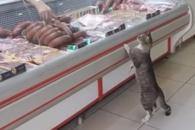 """정육점 방문한 고양이 """"아저씨, 고기 한 조각만 주세…"""