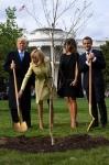 백악관 앞마당에 나무 심는…