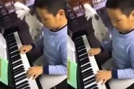 피아노 선율, 제대로 '필' 받은 앵무새