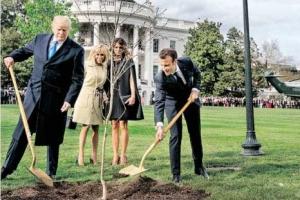 백악관 뜰에서 사라진 마크롱 떡갈나무