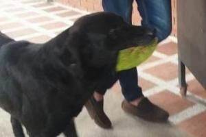 """""""여기 돈!""""… 나뭇잎 내고 간식 사먹는 학교 강아지"""