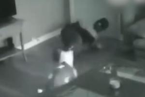 도둑으로부터 주인 지켜낸 대형견