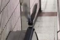 에스컬레이터가 러닝머신? 운동하는 비둘기 화제