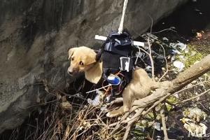 배수구 빠진 강아지 드론으로 구조한 엔지니어