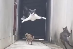 동료 가볍게 따돌린 고양이의 위기 탈출극