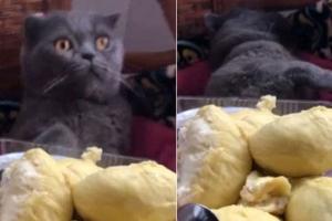 '과일의 왕' 두리안 냄새 맡은 고양이의 반응은?