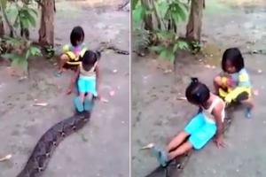 거대 비단뱀 타고 노는 인도네시아 어린이들