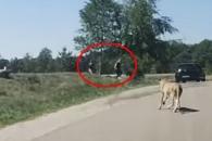 사파리 공원서 사진 찍던 일가족…치타 달려오자
