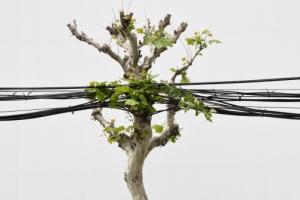 [한 컷 세상] 도시에서 나무로 산다는 건