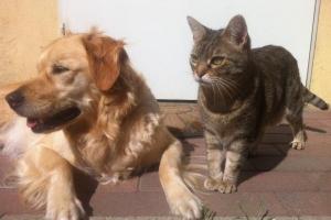 '개·고양이도 선크림 필요하다'..피부암 35% 급증