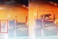 버밍엄서 거리 활보하는 큰 짐승 CCTV에 포착