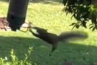 새 먹이 탐내다 '돌아버린'(?) 다람쥐