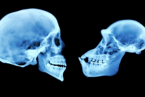 현대인들의 뇌가 '비정상적'으로 커진 이유는?