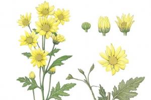 [이소영의 도시식물 탐색] 모든 식물은 잠재적 '허브식물'이다