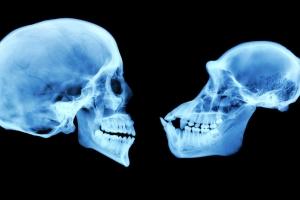 인간의 뇌를 크게 키운 건 관계 맺기보다 생존 본능?