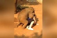 누워서 아기코끼리와 '교감' 나누는 여성