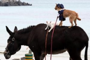 [포토] '넌 편하야옹~' 산책중인 동물가족들