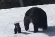 스키 타던 중 흑곰 마주친 남성의 '아찔한 순간'