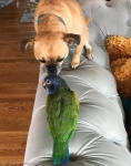 강아지와 앵무새, 사랑에 …
