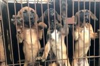 '케이지에 갇힌 개들'…동물권단체, 강화서 불법 투…