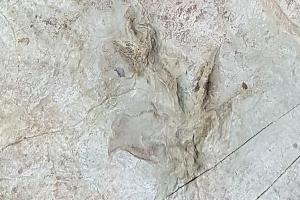 """1억년 전의 새로운 척추동물 발자국 반구대 주변서 발견···""""4족 보행 척추동물"""""""