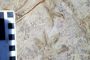 반구대 암각화서 미지의 척추동물 발자국 화석 발견